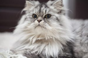 Feeding your senior cat