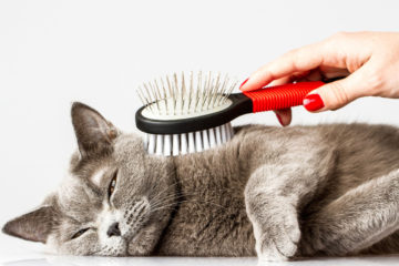 What is the FURminator