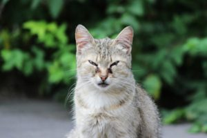 Herpes in the cat: Causes, Symptoms, Treatments