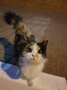 Outdoor Cat In The City