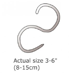 Roundworm Infection in Cats. Ascariasis.
