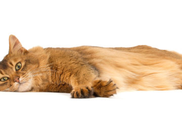 Royal Canine Feline Urinary food. Review