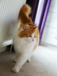 3 ways to stop neutered cat from spraying
