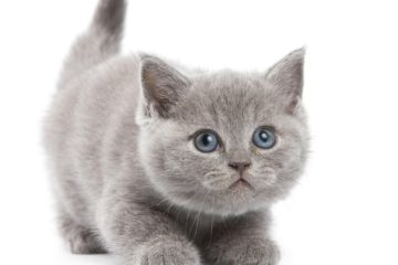 5 useful things for Dispose of Cat Litter