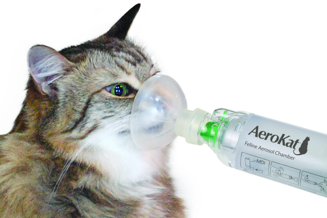 Cat asthma: treatment, symptoms, diagnosis.